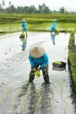 Tre agricoltori del terrazzo del riso delle donne che lavorano nel terrazzo del riso Fotografia Stock Libera da Diritti