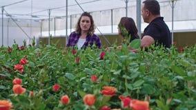 Tre agronomi che stanno in una serra del fiore che guarda intorno stock footage