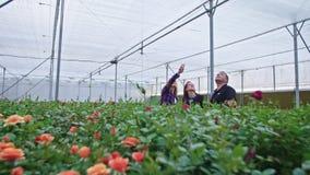 Tre agronomi che stanno in una serra del fiore che guarda intorno archivi video