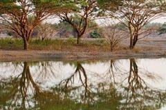Tre alberi Immagine Stock