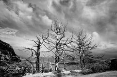 Tre alberi bruciati fotografia stock