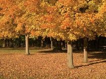 Tre alberi di caduta Immagine Stock