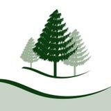 Tre alberi di pino Fotografia Stock Libera da Diritti