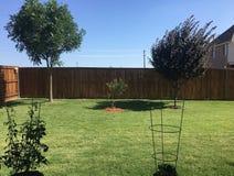 Tre alberi e due piante di pomodori nella periferia fotografie stock
