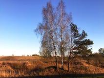 Tre alberi nel campo Fotografie Stock