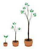 Tre alberi in POT Immagini Stock