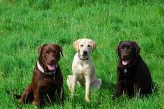 Tre amighi Immagine Stock
