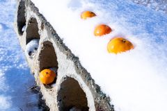 Tre apelsiner överst och en på botten i en konkret tjock skiva royaltyfri foto