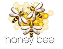 Tre api mellifiche in un alveare Fotografia Stock