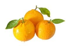 Tre arance con i waterdrops Fotografie Stock