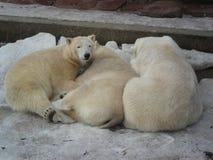 Tre av en sort i zoo royaltyfri foto