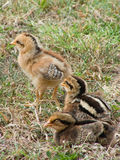 Tre barn behandla som ett barn fågelungar Royaltyfria Bilder