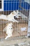 Tre bei cani dietro il riparo delle barre immagine stock libera da diritti