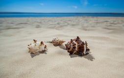 Tre bei, forme variopinte e bizzarre delle conchiglie che si trovano sulla sabbia Immagine Stock Libera da Diritti