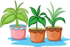 Tre belle piante Fotografie Stock