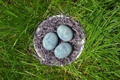 Tre blåa ägg som målas i tehibiskus, lögn i ett hö i ett tefat på gräset, som ägg för en drake och marmor, bästa sikt arkivbild