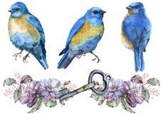 Tre blåa fåglar bakgrund isolerad white Royaltyfria Bilder
