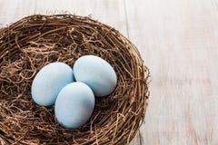 Tre blåa påskägg i ett rede Arkivfoto
