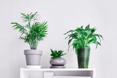 Tre blomkrukor med gröna växter som står på en hylla arkivfoton