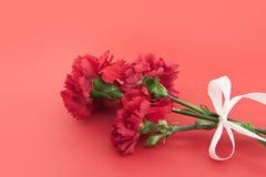 Tre blomma, röda nejlikor med det vita bandet på röd bakgrund Royaltyfri Foto