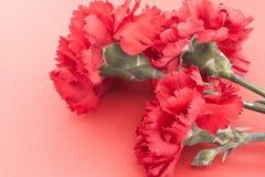 Tre blomma, röda nejlikor på röd bakgrund Royaltyfri Foto