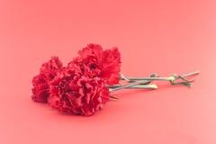Tre blomma, röda nejlikor på röd bakgrund Feriebackgrou Royaltyfria Bilder