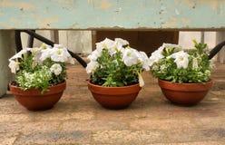 Tre blommakrukar Royaltyfri Fotografi