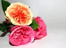 Tre blommor av förälskelse Arkivfoton