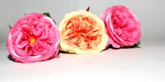 Tre blommor av förälskelse Arkivfoto