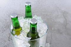 Tre bottiglie da birra in benna di ghiaccio Fotografia Stock Libera da Diritti