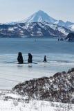 Tre bröder vaggar i den Avachinskaya fjärden och den Viluchinsky vulkan Royaltyfri Foto
