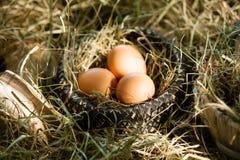 Tre bruna ägg i sugrörrede arkivbilder