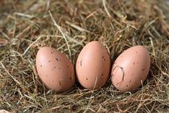 Tre bruna ägg med svarta prickar ligger på höet royaltyfria foton