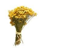 Tre buketter av torkade blommor på en vit bakgrund Arkivfoton