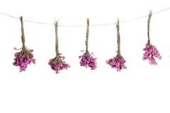Tre buketter av torkade blommor på en vit bakgrund Royaltyfri Foto