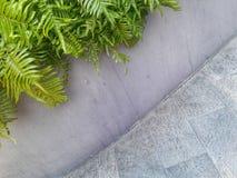 Tre buktade linjer göras av gröna växter och liten cementväggar och tegelplattadurk Royaltyfria Foton