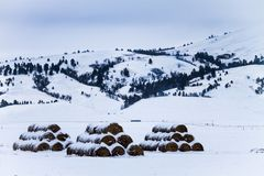 Tre buntar av snöig hej baler Royaltyfri Foto