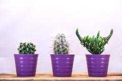 Tre cactus in una fila Fotografia Stock