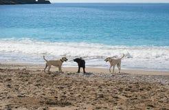 Tre cani Fotografia Stock Libera da Diritti