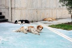 Tre cani che dormono sulla pavimentazione a Durres, Albania Immagini Stock Libere da Diritti