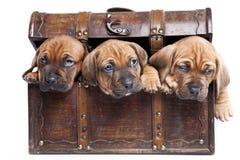 Tre cani felici su priorità bassa bianca Immagini Stock Libere da Diritti