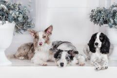 Tre cani insieme Fotografia Stock Libera da Diritti