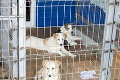 Tre cani leggeri dietro il riparo delle barre fotografia stock libera da diritti