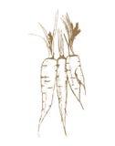 Tre carote illustrazione vettoriale