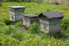 Tre case di legno dell'alveare per le api stanno su erba nel villaggio Fotografia Stock