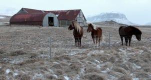 Tre cavalli Immagine Stock Libera da Diritti