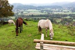 Tre cavalli che pascolano vista di autunno del villaggio di Zasip, touri della Slovenia immagini stock
