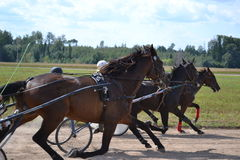 Tre cavalli scuri Fotografia Stock