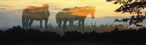 Tre cavalli su un fondo del cielo di alba Fotografia Stock Libera da Diritti