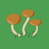 Tre champinjoner på gräs Royaltyfria Bilder